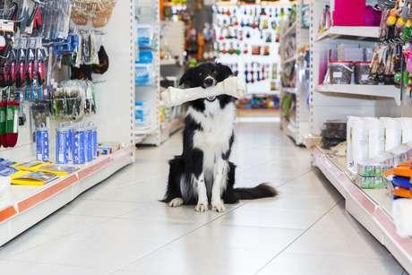Associação Brasileira da Indústria de Produtos para Animais de Estimação (Abinpet) estima que há 141 milhões de animais domésticos no País
