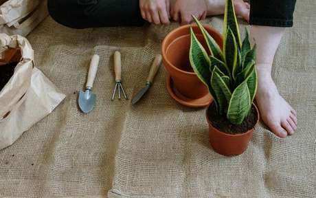Veja como desenvolver a paciência com o cultivo de plantas -