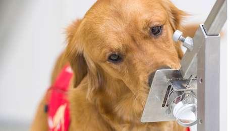 Cães são capazes de sentir muito mais cheiros do que os humanos
