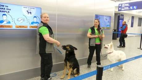Sniffed dogs have helped fight the pandemic