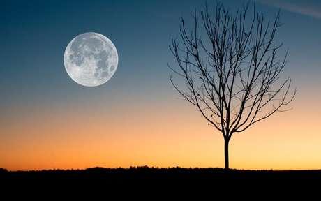 Descubra a relação entre o crescimento das plantas com as fases da Lua -
