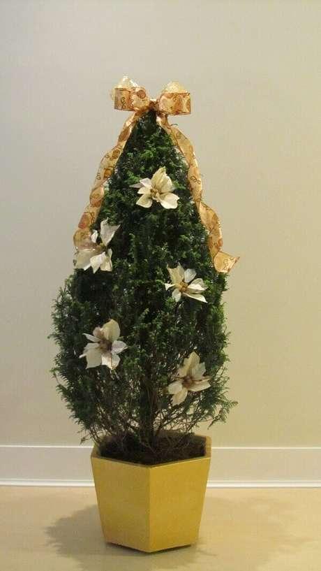 4- O vaso amarelo contrasta com o verde do pinheiro de natal natural, Fonte: Quiosque Quintino Bocaiuva