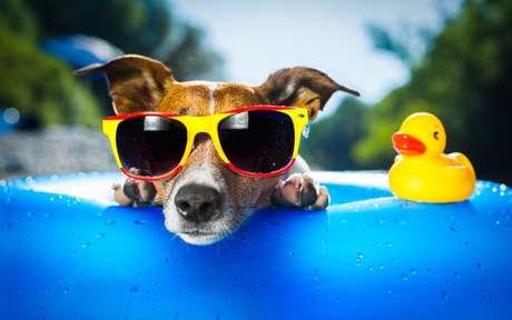 Confira 10 dicas para aliviar o calor do seu cachorro nos dias quentes