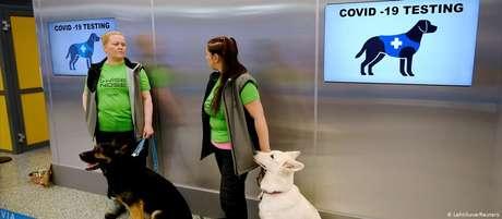 No aeroporto de Helsinque, quatro cães se revezam para farejar os passageiros