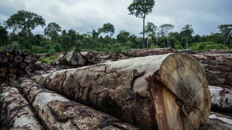 Diversas terras indígenas sofrem com impactos causados por grandes empresas