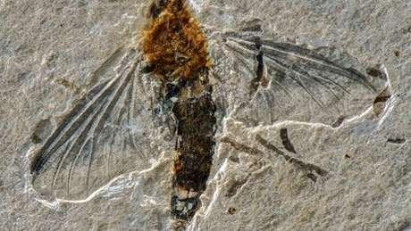 Inseto encontrado é um adulto da família Oligoneuriidae