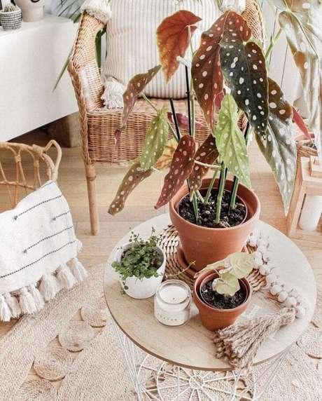 4. A mesa de centro ficou ainda mais charmosa com essa planta. Fonte: Pinterest