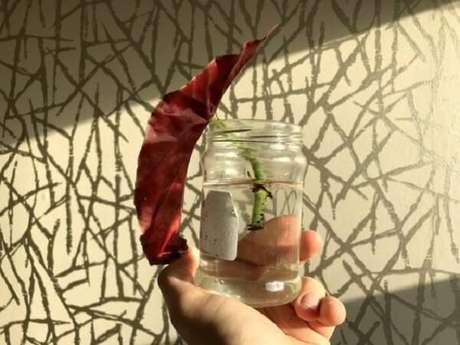 7. Para fazer begonia maculata muda corte um pedaço de caule com cerca de 4 folhas e coloque na água até a formação das raízes. Fonte: Casa Abril