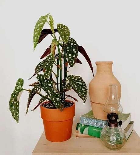 12. Se surpreenda com o visual exótico e aprenda como plantar Begônia Maculata. Fonte: Semih Topal