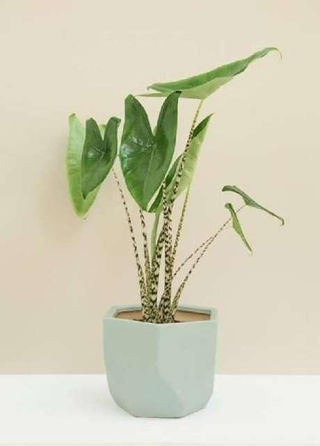 10. A Alocasia Zebrina precisa de luz indireta para crescer saudável. Fonte: Pinterest