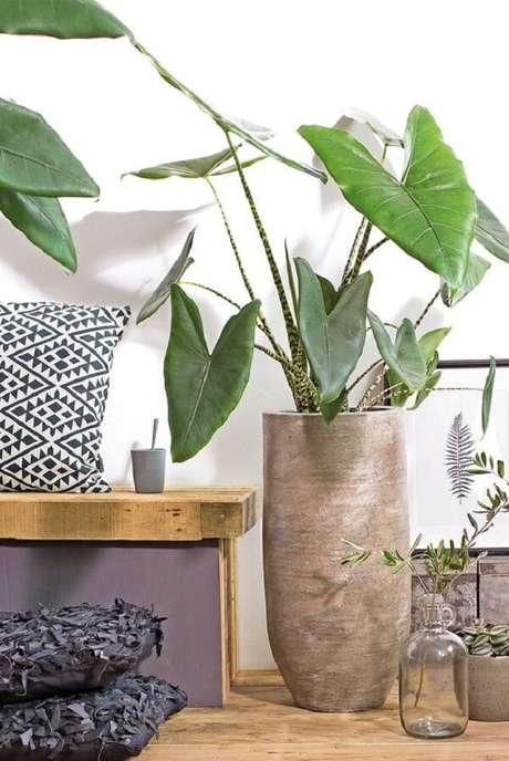 13. A Alocasia cuidados Zebrina também é uma planta tóxica se ingerida. Fonte: Pinterest