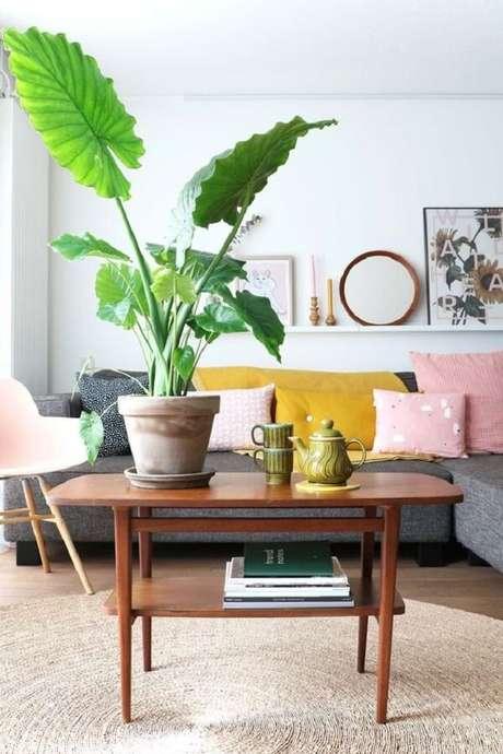 21. A planta Alocasia flor decora diferentes ambientes da casa. Fonte: Pinterest