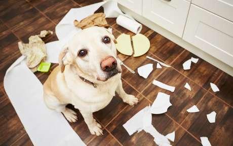 Animais em casa: saiba como deixar seu lar mais seguro para os pets