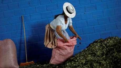 Vírus tem esse nome por causa da região boliviana de Chapare, conhecida também por sua produção cocaleira