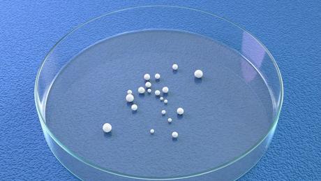 Ilustração mostra tamanho de minicérebros numa placa de Petri. É possível vê-los a olho nu.