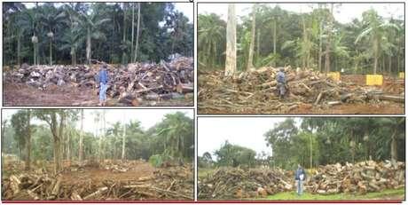 Em 2008, construtora já havia iniciado corte de árvores mas ação foi embargada pelo MP