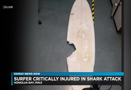 Surfista amador morreu após ataque de tubarão no Havaí (Foto: Reprodução/Hawaii News Now)