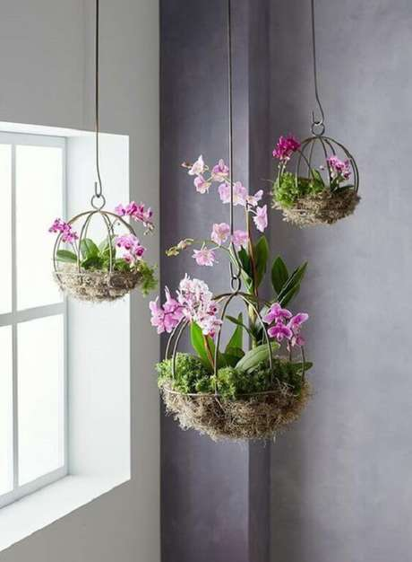 7. Mini orquídeas cultivadas como flores para vaso suspenso. Fonte: Pinterest