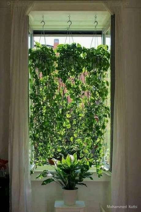 18. Os vasos suspensos para plantas pendentes criam um efeito lindo em janelas. Fonte: Pinterest