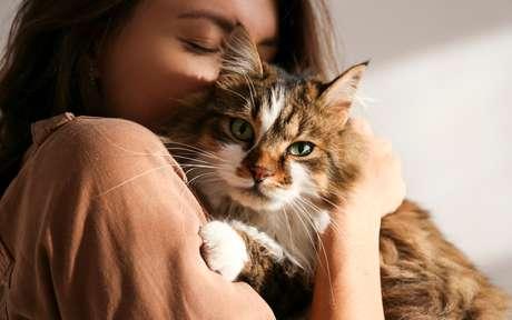 Mitos e verdades sobre os animais de estimação que irão te surpreender