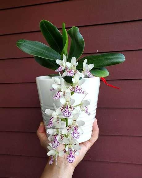 49. Vaso para orquídea branca – Via: Pinterest
