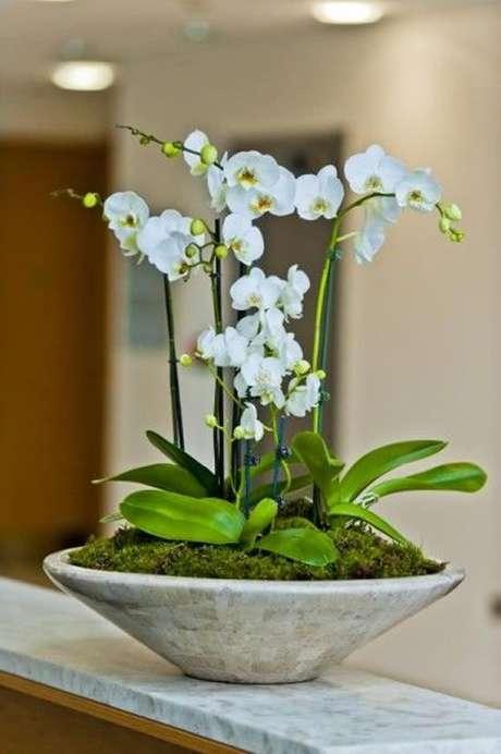 10. Vaso de orquídea feito de cimento – Via: Como fazer em Casa
