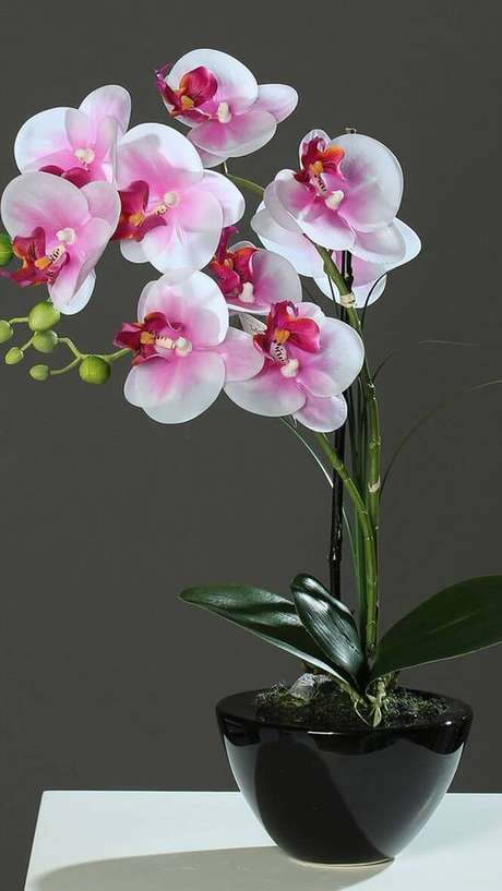 33. Vaso de orquídea preto – Via: Pinterest