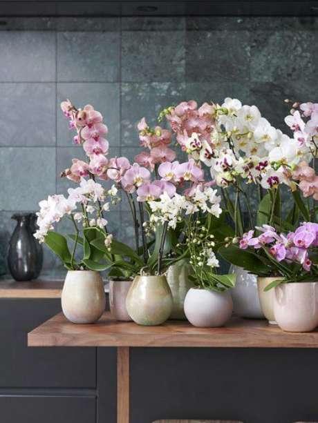 41. Vaso de orquídea – Via: The Joy of Plants