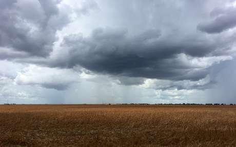 Plantação de soja em propriedade rural de São Desidério, na Bahia REUTERS/Roberto Samora
