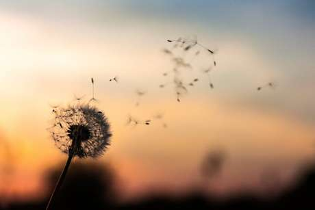 A natureza é uma aliada na busca pela liberdade da alma