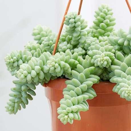 3. Suculentas pendentes como cuidar – Via: Pinterest
