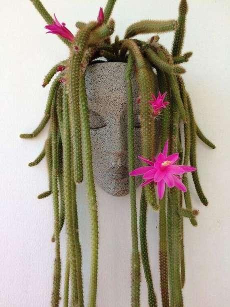 10. Suculentas pendentes do tipo cauda de rato – Via: Pinterest