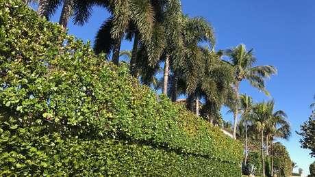 As propriedades em Palm Beach costumam ser muito isoladas do exterior