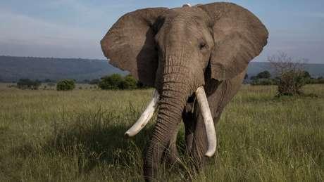 Quadrilha teria contrabandeado R$ 40 milhões em marfim e chifres de rinocerontes