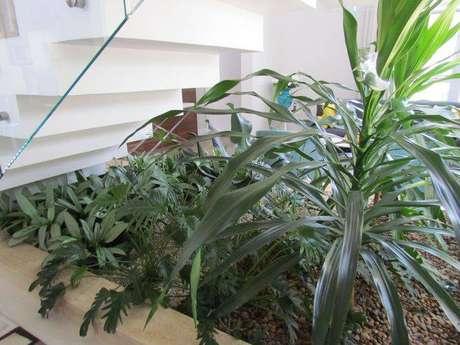 9. Escolham plantas que se adaptem bem dentro de casa para o seu jardim de inverso