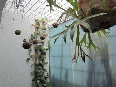 10. Um jardim vertical pode estar num jardim de inverno também