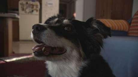 O tutor da cadelaLulu deixou uma herança de US$ 5 milhões para ser usada nos cuidados com o animal.