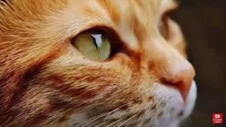 Confira os vídeos de gatos mais acessados no YouTube nos últimos 12 meses