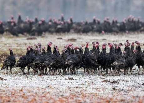 Gripe aviária raramente é transmitida de humano para humano