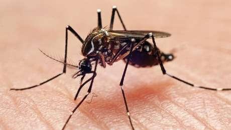 O mosquito Aedes aegypti é o principal transmissor de dengue, zika e chikungunya em regiões urbanas do Brasil
