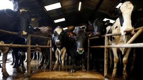 'Para mais de 90% das vacinas para gado, o ciclo completo de produção ocorre em território brasileiro', diz Emílio Saldanha, vice-presidente do Sindan