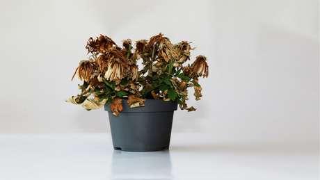 Saiba porque planta murcha indica energia negativa no ambiente