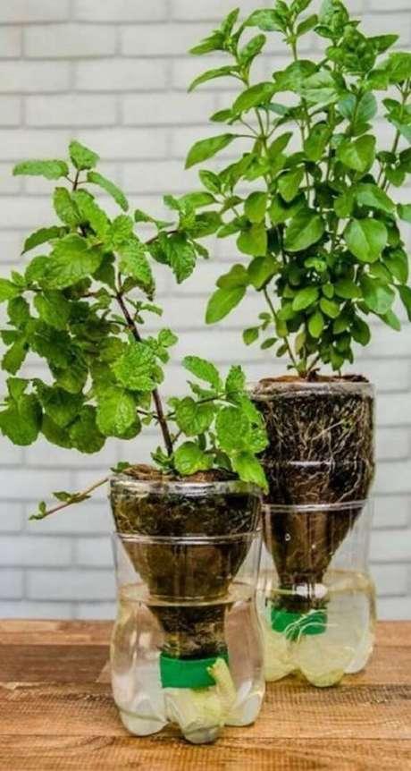 8. Temperos cultivados em mini horta com garrafa pet. Fonte: Revista Artesananto