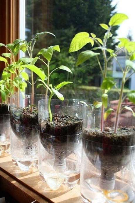 """1. Essa horta com garrafa PET usa a tampa com um cordão para """"alimentar"""" a planta com a água da base. Fonte: Pinterest"""