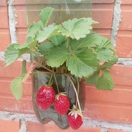 24. Aproveite para cultivar deliciosos morangos na sua horta com garrafa PET. Fonte: Pinterest