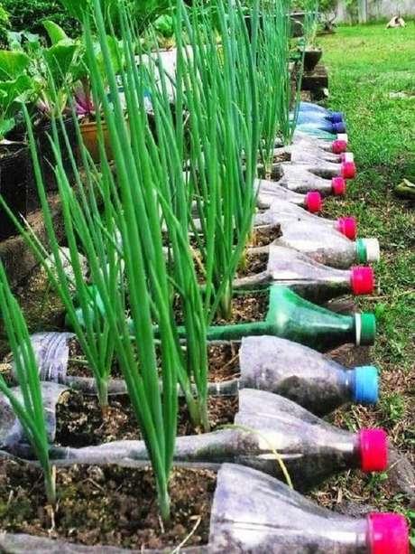7. Cebolinhas são alguns dos temperos que podem ser cultivados na horta com garrafa pet no chão. Fonte: Pinterest