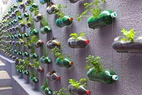6. Todo o muro foi preenchido com a horta vertical com garrafa pet. Fonte: Marcelo Rosenbaum
