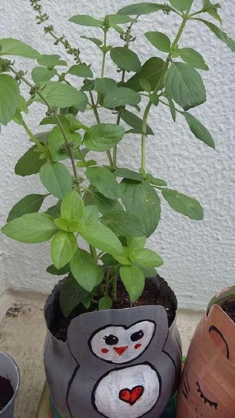 14. Cultive o manjericão na horta com garrafa PET. Fonte: Pinterest