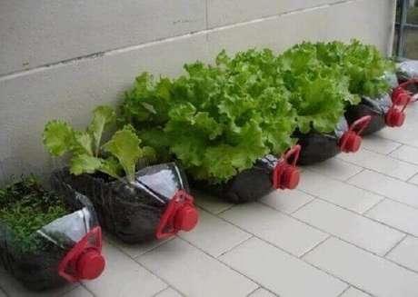 21. O alface cultivado na horta com garrafa PET deve ser regado nas primeiras horas da manhã. Fonte: Mundo Ecologia