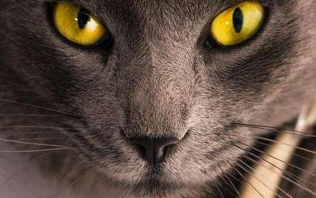 Saiba mais sobre os dons místicos dos gatos - Foto de Mermek AM no Pexels